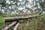 Lâm Đồng: Phúc tra hiện trường các vụ phá rừng, hủy hoại rừng từ năm 2016 đến nay
