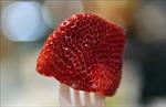 Australia nâng mức phạt tù tội phá hoại hoa quả có chủ đích tương đương với tội ấu dâm