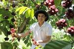 Thu nhập cao từ phát triển trang trại nông nghiệp hữu cơ