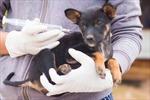 Đăng ký gắn chíp lên thú cưng sẽ được hỗ trợ tiền