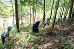 Lai Châu chủ động phòng, chống cháy rừng mùa hanh khô