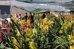 Đà Lạt nhộn nhịp chuẩn bị hoa Tết