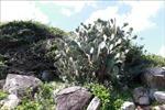Phát triển du lịch bền vững Vườn quốc gia Núi Chúa, Ninh Thuận