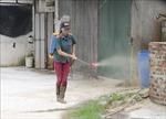 Hỗ trợ quốc tế giúp Việt Nam ứng phó dịch tả lợn châu Phi