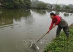 Cá chết bất thường ở Thái Nguyên nghi do ô nhiễm nguồn nước