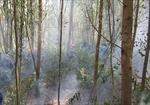 Nhiều vụ cháy rừng tại hai huyện Mường Ảng và Tủa Chùa (Điện Biên)