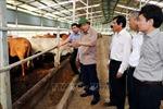 Hòa Bình phát triển chăn nuôi, phòng chống dịch bệnh gia súc, gia cầm