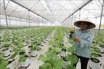 Bắc Giang phát huy hiệu quả vốn tín dụng chính sách xã hội