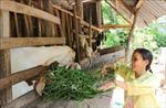 Nguồn lực tiếp sức cho hộ nghèo vươn lên
