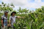 Hợp tác xã nông nghiệp phát triển cả về lượng và chất