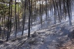 Khống chế được đám cháy rừng thông 40 năm tuổi tại Nghệ An