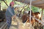 Thanh Hóa: Phát triển kinh tế - xã hội vùng đồng bào dân tộc Mông đặc biệt khó khăn