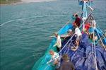 Dịch COVID-19: Cá rớt giá, ngư dân vẫn kiên cường bám biển