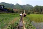 Làng quê Tuyên Quang đổi mới nhờ phát huy sức mạnh 'ý Đảng lòng dân'