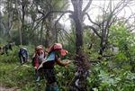 Gắn bảo vệ rừng với tạo sinh kế cho người dân vùng cao