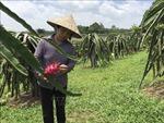 Vĩnh Phúc có 100% số xã đạt chuẩn nông thôn mới