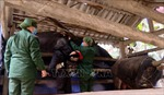 Rét hại tăng cường, Lào Cai đôn đốc phòng tránh rét cho cây trồng, vật nuôi