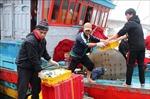 Khắc phục 'thẻ vàng' IUU: Quảng Trị giám sát 100% sản lượng hải sản cập cảng