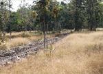 Tây Ninh chủ động phòng cháy và chữa cháy rừng trong mùa khô