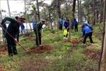 Khoảng 6 triệu ha rừng ở Việt Nam được hỗ trợ chi trả dịch vụ môi trường rừng