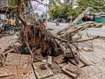 Cần Thơ: Hỗ trợ người dân bị ảnh hưởng do mưa dông