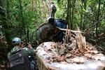 Vụ phá rừng phòng hộ ở Quảng Ngãi: Kiểm điểm trách nhiệm lãnh đạo và kiểm lâm viên
