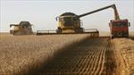 Nga khẳng định sức mạnh chi phối trên thị trường lúa mỳ