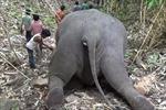 Sét đánh chết 18 con voi tại khu bảo tồn thiên nhiên ở Ấn Độ