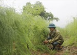 Lào Cai mang măng tây xuống chinh phục người tiêu dùng Thủ đô