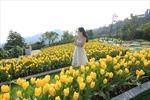 Tháng 3 ngọt ngào với Lễ hội hoa tulip lớn nhất Việt Nam
