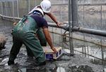 Chuyên gia Nhật Bản trình diễn xử lý bùn sông Tô Lịch thành khí CO2 và nước