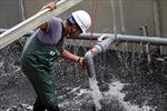 Để làm sạch sông Tô Lịch, công nghệ Nano-Biorector hoạt động như thế nào ?
