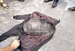 Tạm giữ nam thanh niên câu trộm rùa ở hồ Gươm
