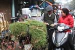 Người Hà Nội mua rau mùi già tắm Tất niên