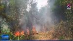 Nghệ An dập tắt hoàn toàn cháy rừng ở Diễn Lộc
