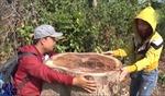 Kỷ luật 3 cán bộ liên quan việc phá rừng tại Đồng Nai
