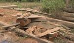 Vi phạm về bảo vệ rừng ở Lào Cai có chiều hướng gia tăng