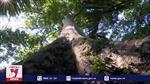 Giữ gìn rừng nguyên sinh Trung Trường Sơn
