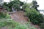 Gần chục hộ dân huyện Ba Vì trước nguy cơ bị 'nuốt chửng' vì sạt lở ven sông Hồng