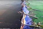 Công bố kết quả hàm lượng oxy tại khu xử lý nước bằng Công nghệ Nhật Bản tại Hồ Tây
