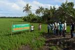 Nông dân dự án VnSAT tăng lợi nhuận trong bão rớt giá cà phê và lúa gạo