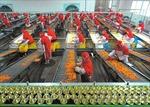 Triển lãm quốc tế về công nghiệp chế biến, đóng gói và bảo quản nông sản, thực phẩm