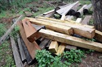 Bắt Đội trưởng Đội Kiểm lâm nhận hàng trăm triệu đồng, 'làm ngơ' vụ vận chuyển gỗ lậu