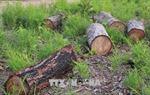 Kỷ luật Chủ tịch xã để xảy ra việc phá rừng, tranh chấp đất rừng làm 8 người thương vong