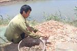 Người dân Thanh Hóa chưa nhận được hỗ trợ thiệt hại do bão số 10 gây ra