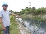 Trường học 'nhịn thở' vì nước thải của cụm công nghiệp