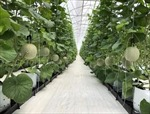 Ứng dụng công nghệ cao, phát triển nông nghiệp an toàn, thân thiện môi trường