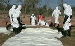 Phát hiện 7 ngôi mộ tập thể chứa hàng trăm thi thể tại Syria