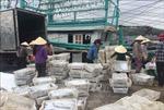 Ngư dân Quỳnh Lưu trúng đậm mẻ cá hố trị giá gần 1,5 tỷ đồng