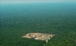Tiếng 'kêu cứu' từ rừng nhiệt đới trên Trái Đất